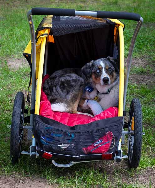 Gear Review: Burley Tail Wagon | Long Haul Trekkers