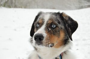 My first SNOW DOG DAYZ with daddyz!