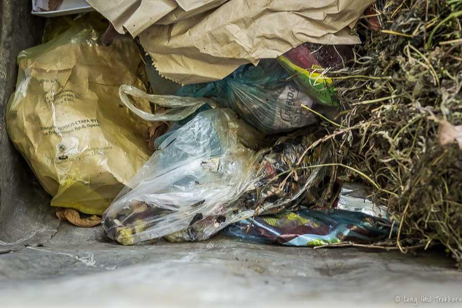 Dumpster_Cats-1
