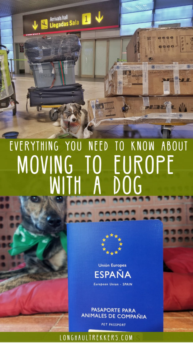 Moving to Europe with a dog? This is everything you need to know.