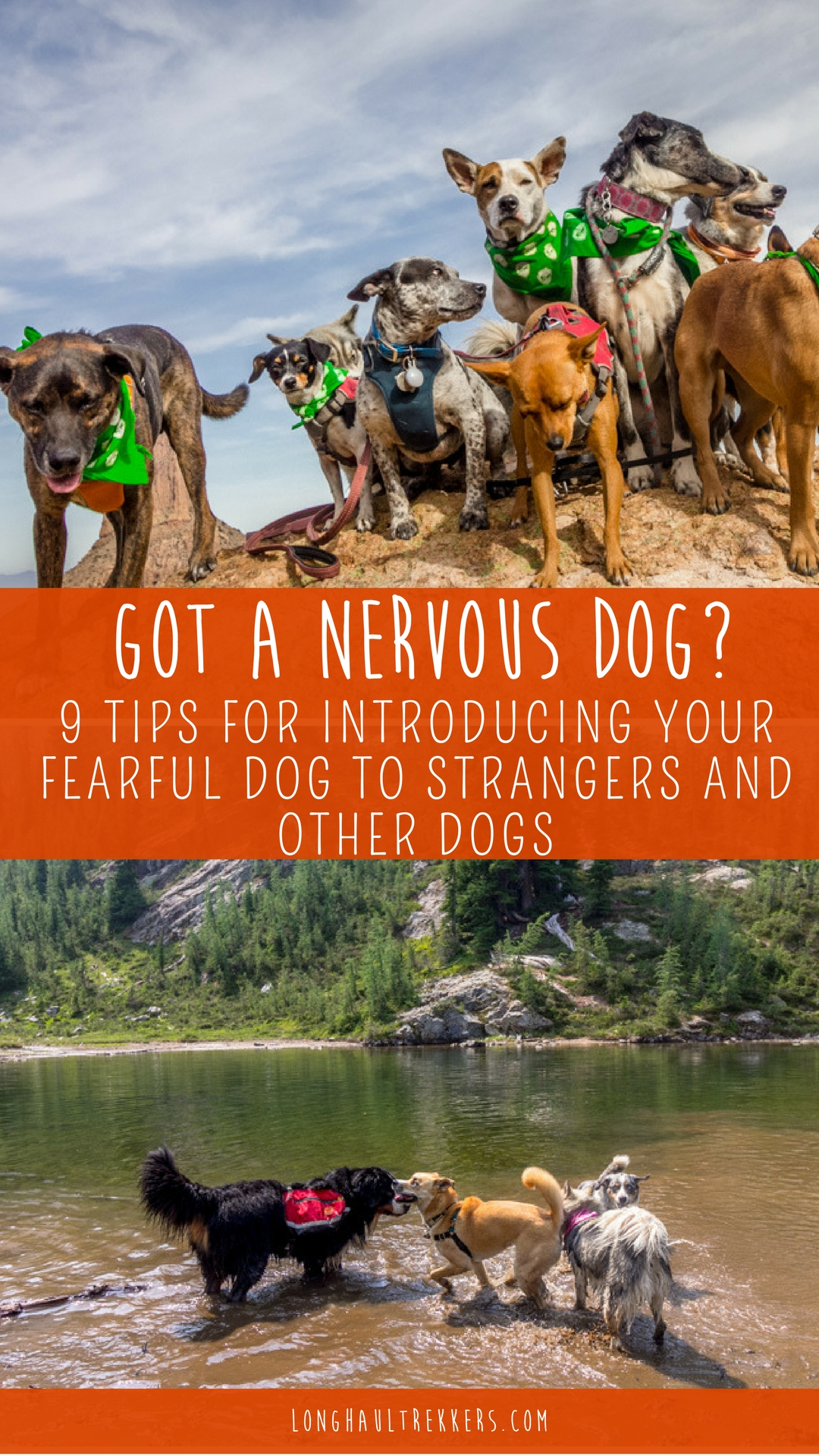 Getting out with a nervous dog can be stressful. Follow these 9 tips for helping reassure your nervous dog around new dogs and strangers.