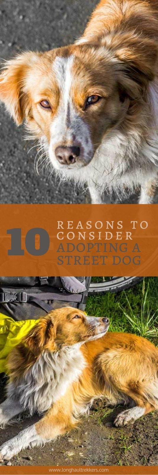 10 Reasons to Consider Adopting a Street Dog | Long Haul Trekkers
