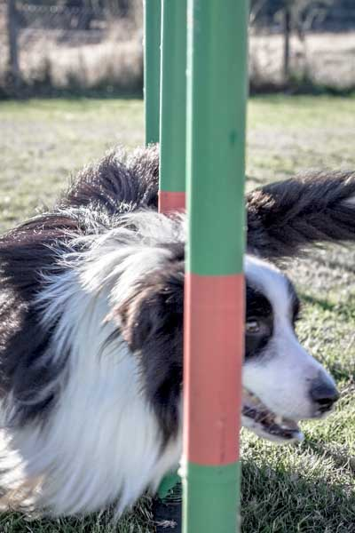 Sora visits a dog agility course in Chile and tells the tail in the latest Behind the Spokes: Ninja Warrior Dog Edition