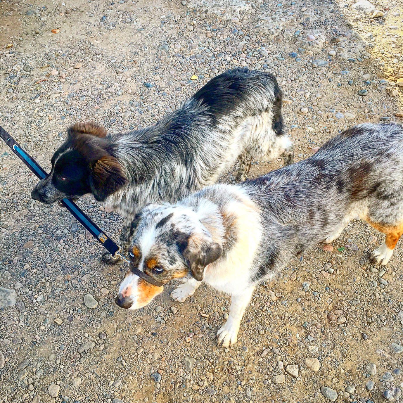 Consider adopting a street dog, like our friend Miranda