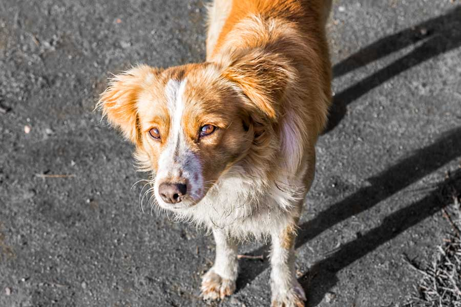 Consider adopting a street dog, like adorable Peanut.