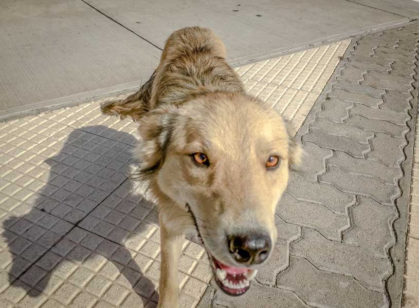 Consider adopting a street dog, like Salta from Chile Chico