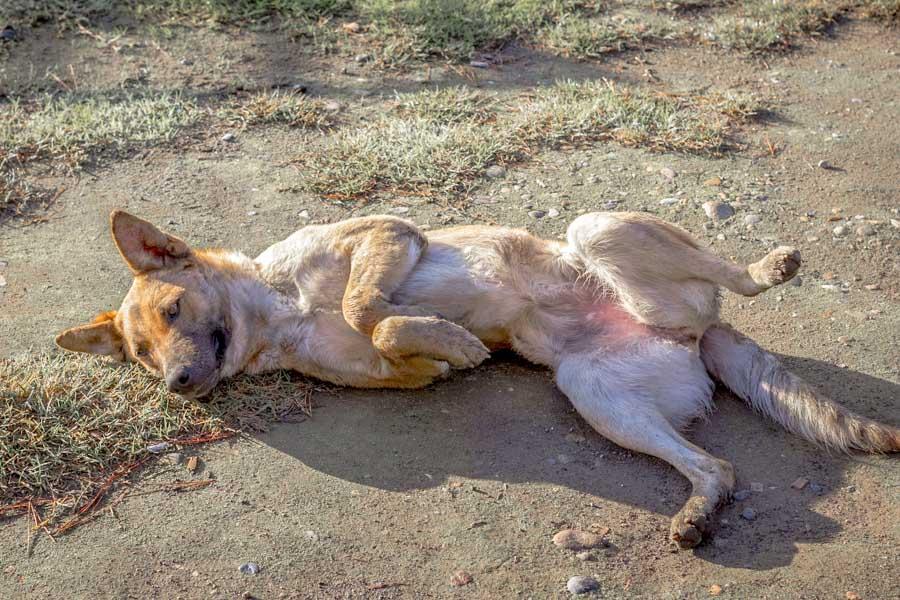 Consider adopting a street dog, like this sweet German Shepherd