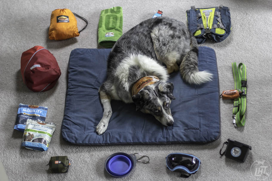 Make sure to bring along the right gear when you bike with your dog.