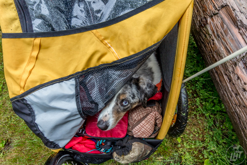 If you bike with your dog, make sure to create a cozy space inside the trailer so it's a place that appeals to your pup.