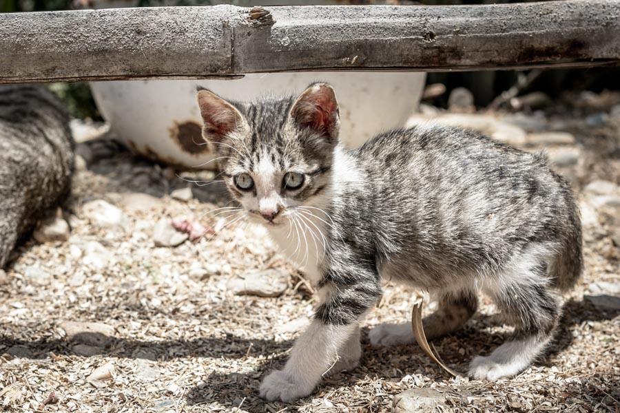 Two Weeks Volunteering at an Animal Shelter in Northern Peru | Long Haul Trekkers #animalrescue #adoptdontshop