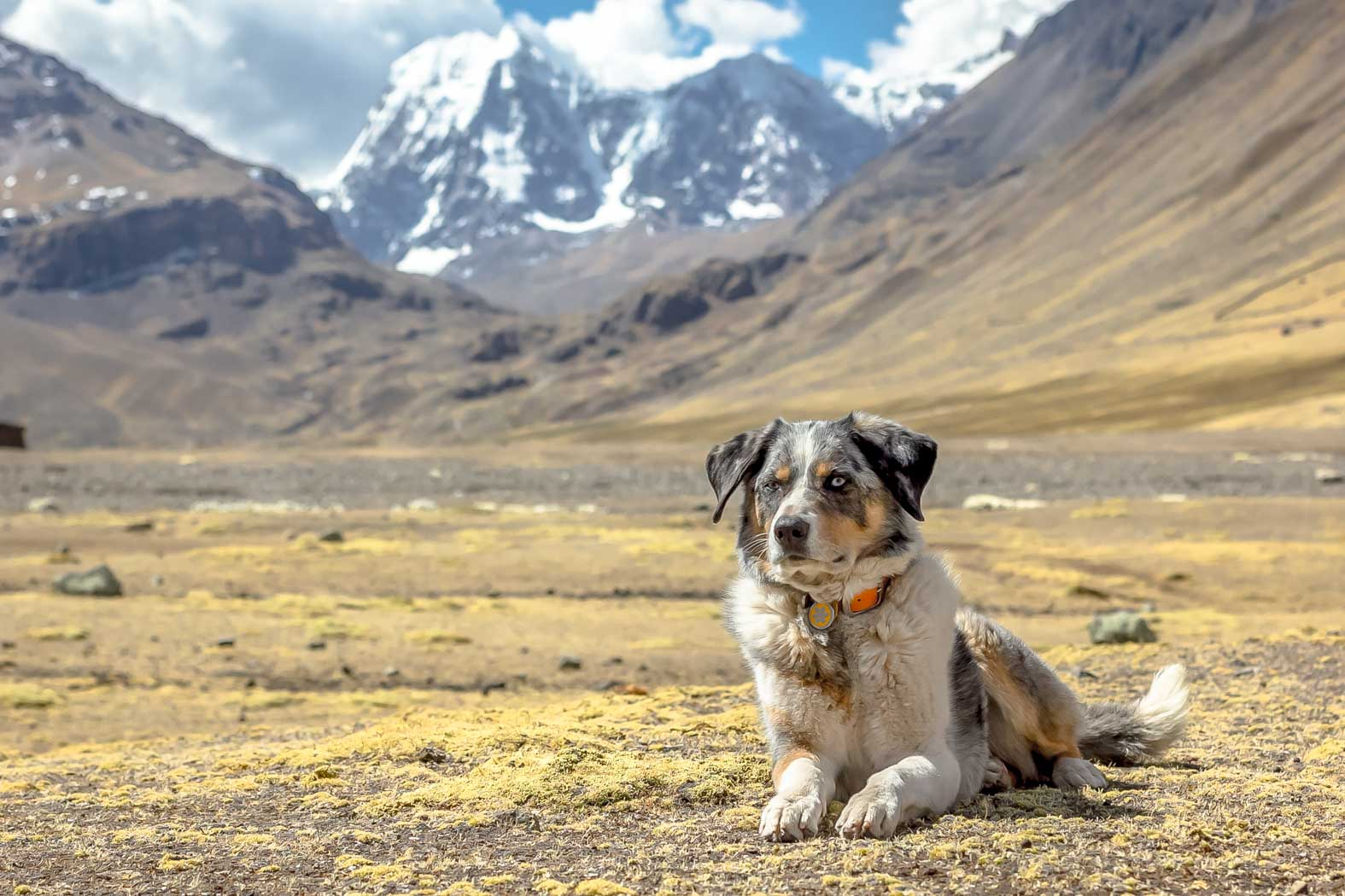 High Altitude Will It Affect My Dog Long Haul Trekkers