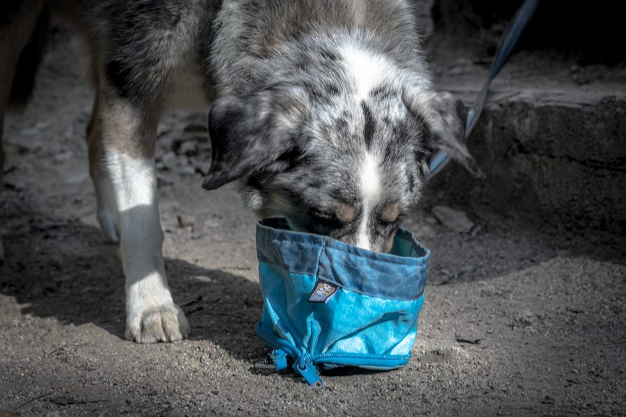 Keeping Your Active Dog Hydrated on Outdoor Adventures | Long Haul Trekkers