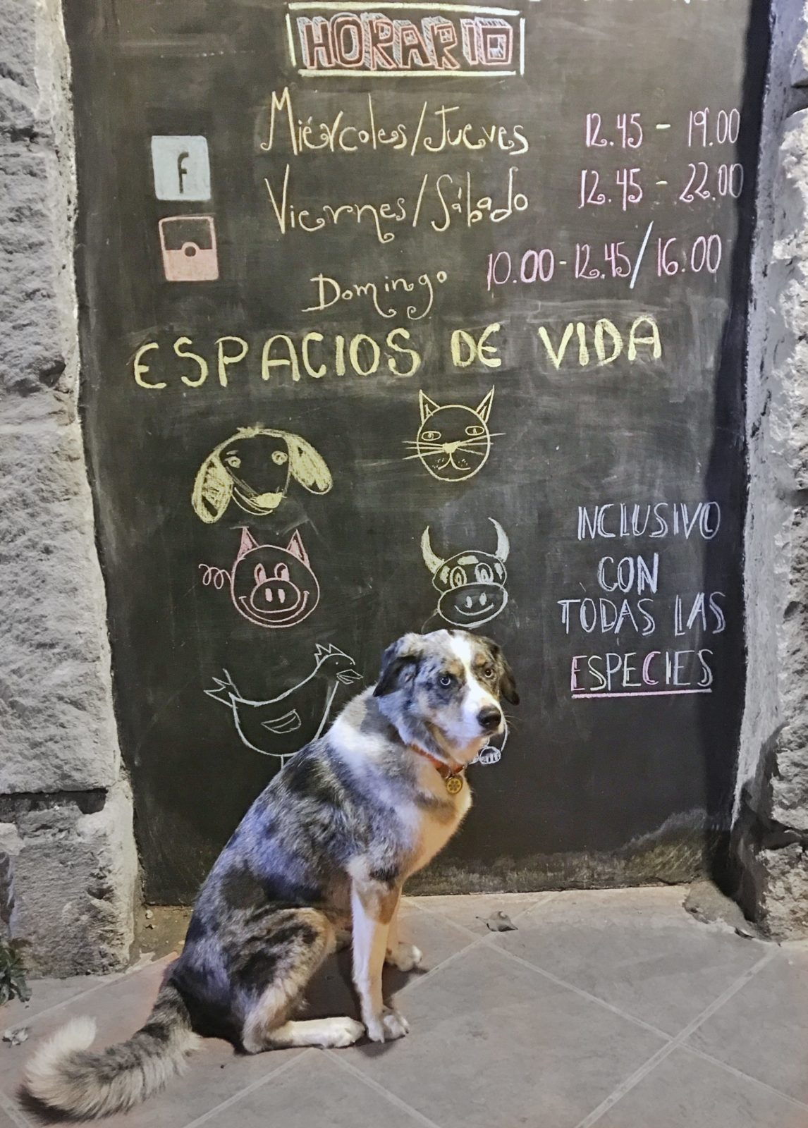 Dog-Friendly Quito - Parks and Bites. The Best calzone in South America from Tandana.| Long Haul Trekkers
