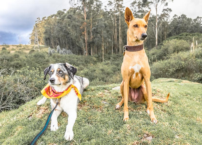 Dog-Friendly Quito - Parks and Bites   Long Haul Trekkers