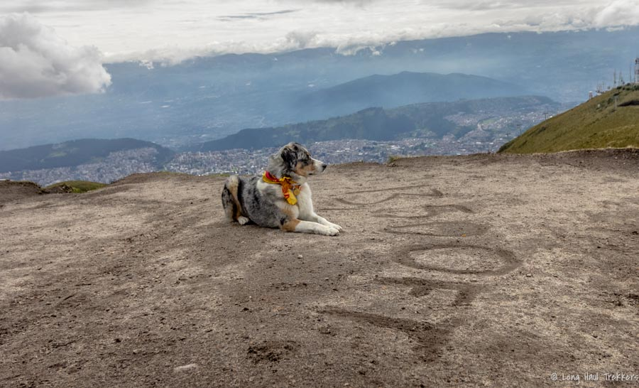 Dog-Friendly Quito - Parks and Bites. Dog biscuit from Cafe Mosaico  Long Haul Trekkers