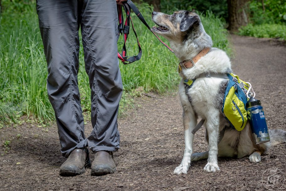 Keeping Your Dog Hydrated on Outdoor Adventures | Long Haul Trekkers