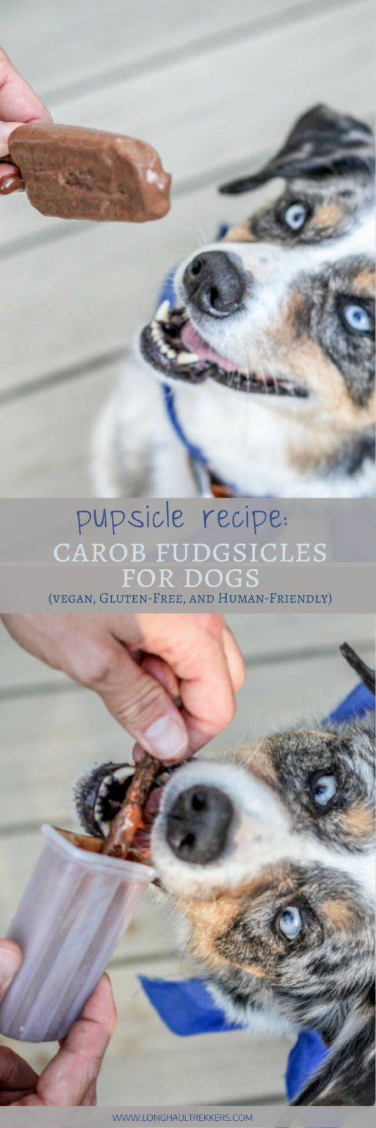 Pupsicle Recipe: Carob Fudgsicles for Dogs