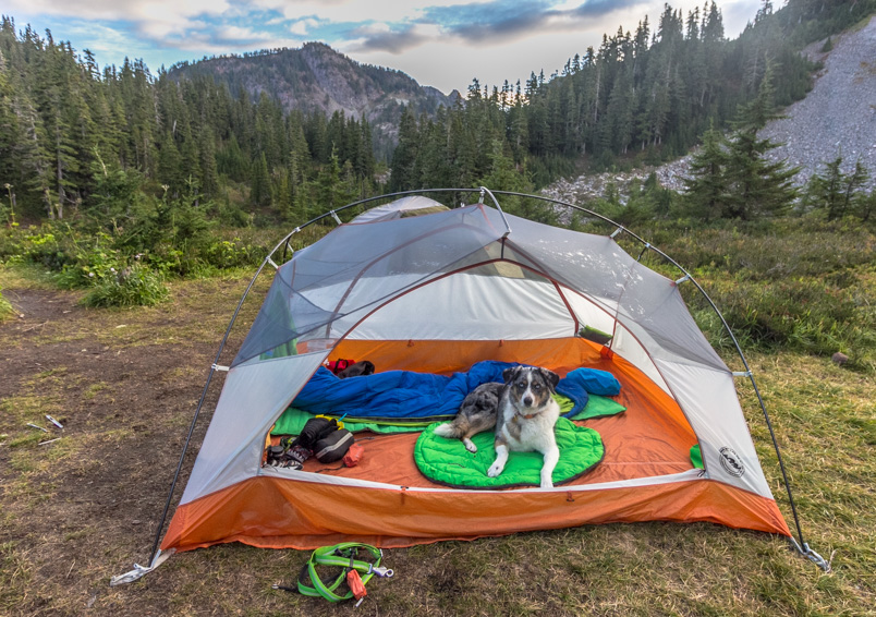 The top 10 items to bring when traveling with a pet to reduce stress and make the trip easier.