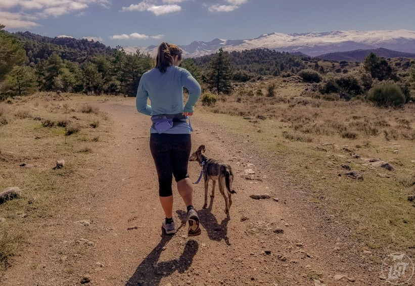 We love the Ruffwear Trail Running System for running with a dog.