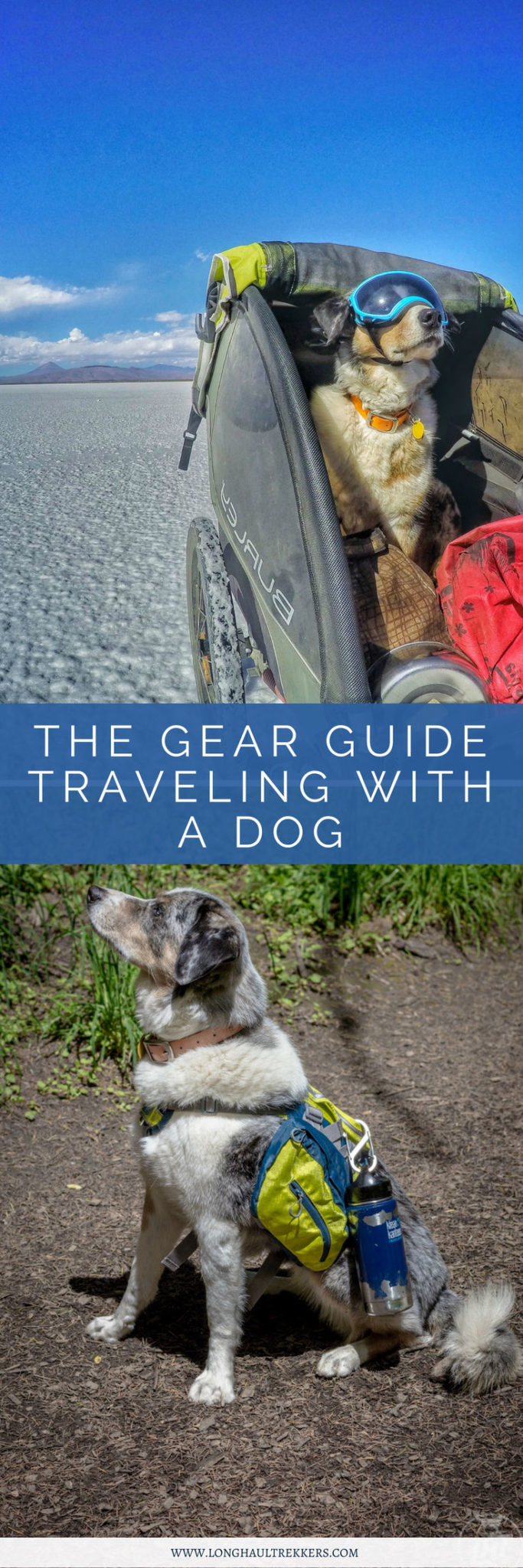 Want to travel with your dog? Check out our travel with a dog gear guide.