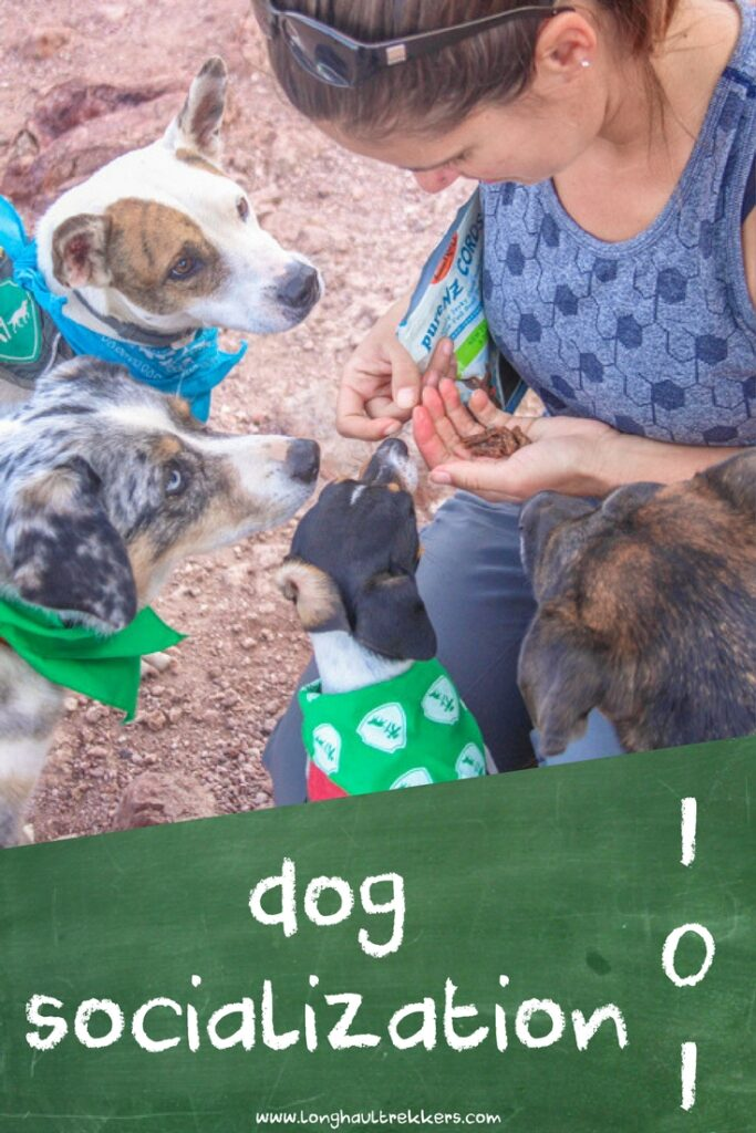 Introducing new dogs to a pack can be overwhelming for both you and your dog. Employing these basic dog socialization techniques will help make for smoother introductions.