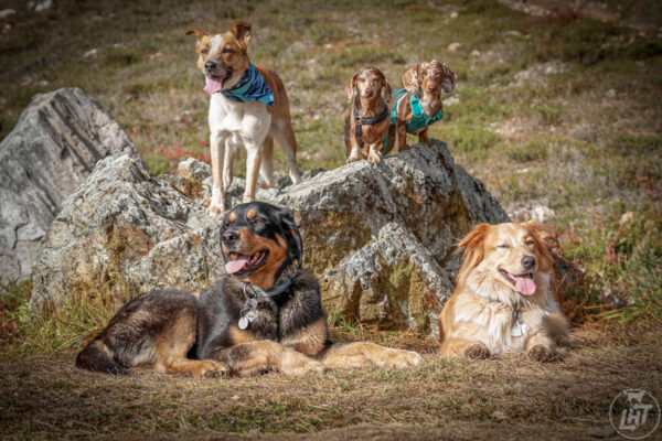 Dog socialization isn't what you think. Here's how to do it right