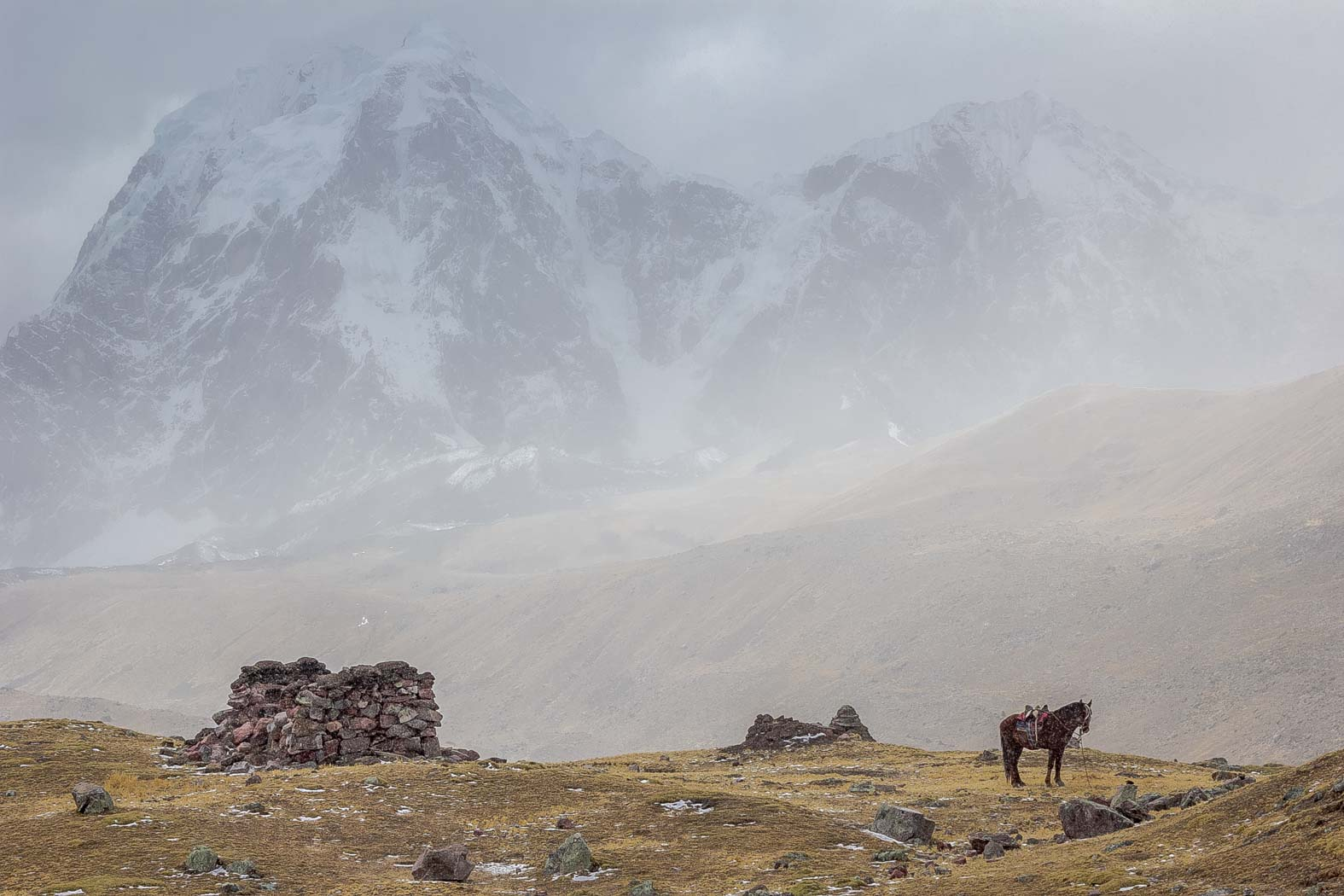 A lone horse standing in the coming storm.