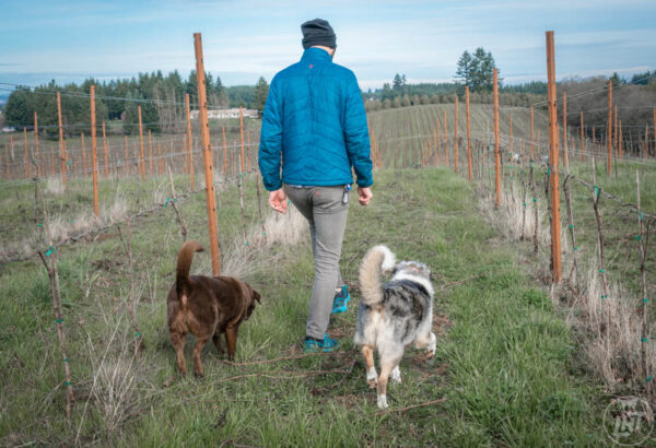 Maya, wine dog of Coria Estates, leads Sora and Dave down the vineyard.