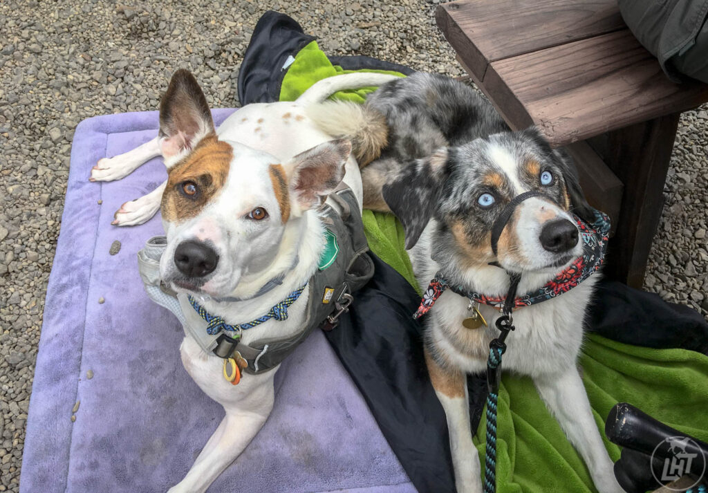 Sora and her pal, Remmy hang out at dog-friendly Portland brewery Basecamp Brewing