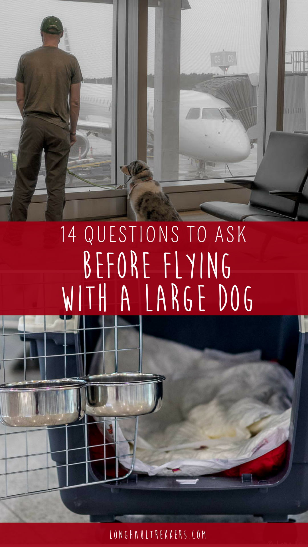 Before flying with a large dog in cargo, make sure you know the answers to the following questions.