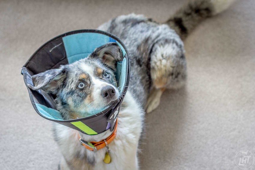 Sora has spent nearly nearly three months of the past 12 in a cone.