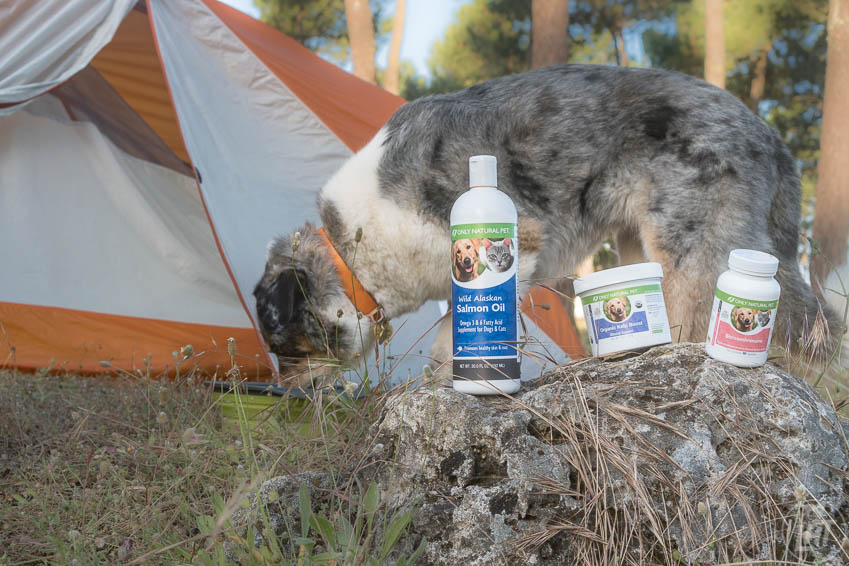 Recommended Foods to Include in a Dog Cancer Diet - Long Haul Trekkers