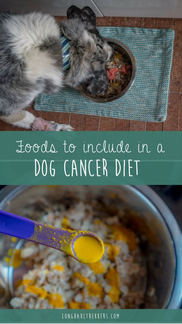 After Sora was diagnosed with cancer for a fourth time, I did a ton of research on what foods and supplements to include in a dog cancer diet.