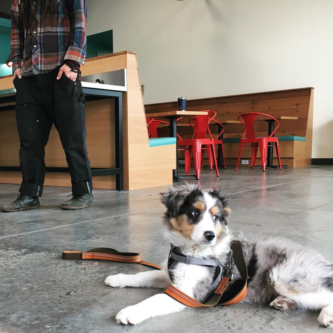 Need to do laundry? No worries, Spin has a cafe, WiFi, and is dog-friendly!