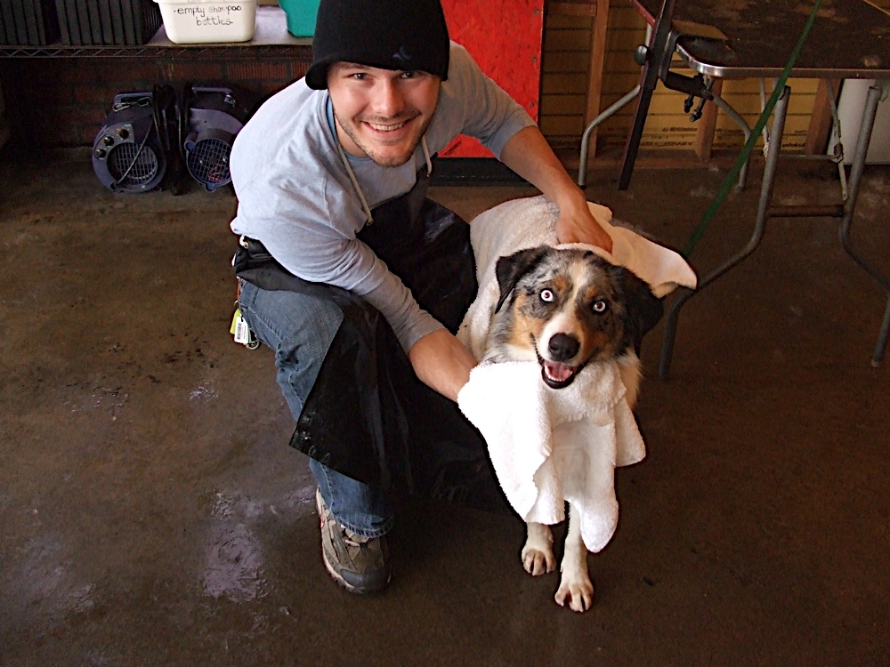 Pamper your pup at Portland's DIY dog spa Beauty and the Bark.