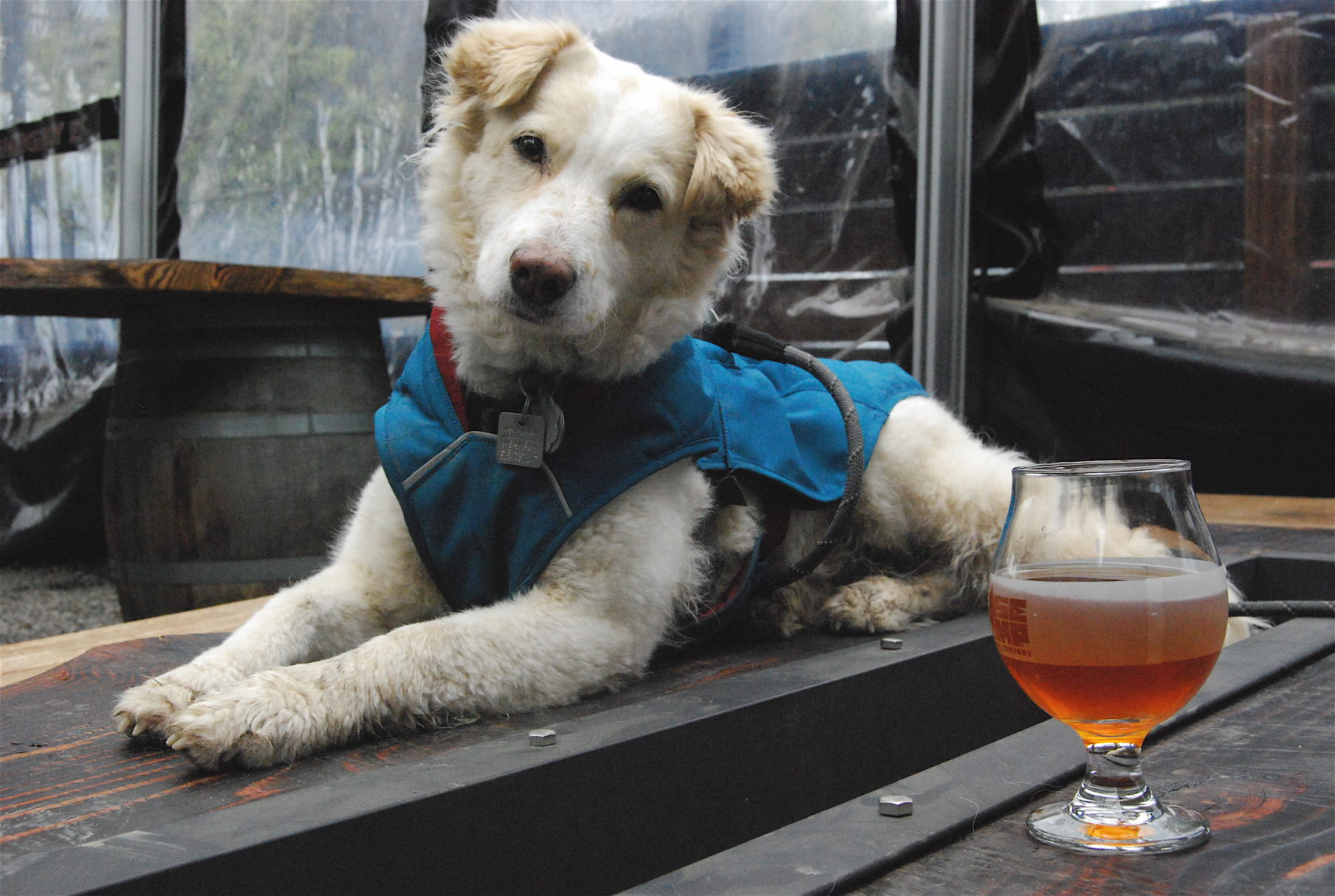 Cassie enjoys a visit to Base Camp Brewing in Portland, OR.