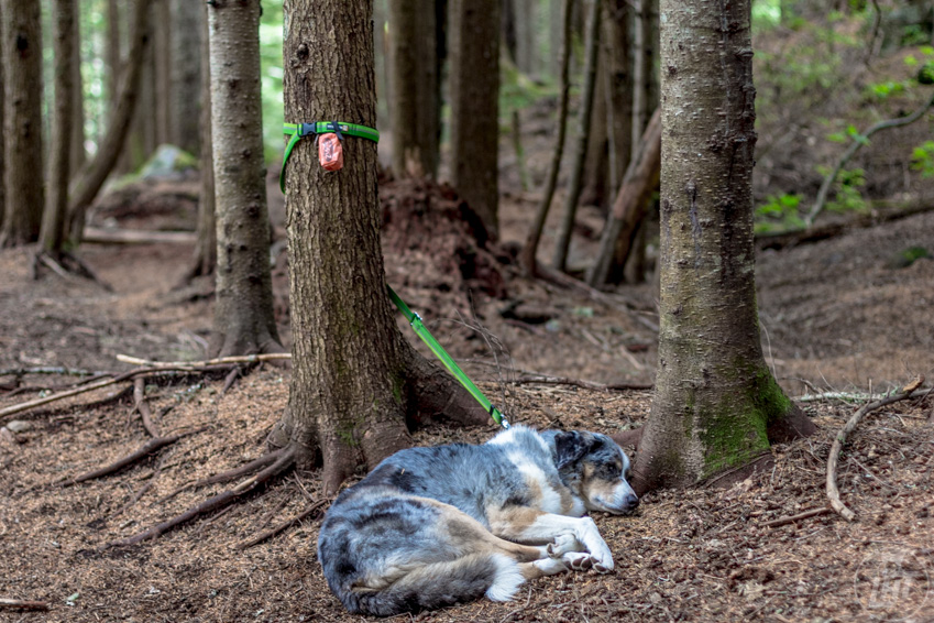 Sora relaxing by a tree using the slackline leash.