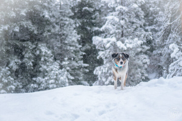 Tired of the long gray winters? Then escape the gray and check out one of these dog-friendly winter hikes near Seattle.