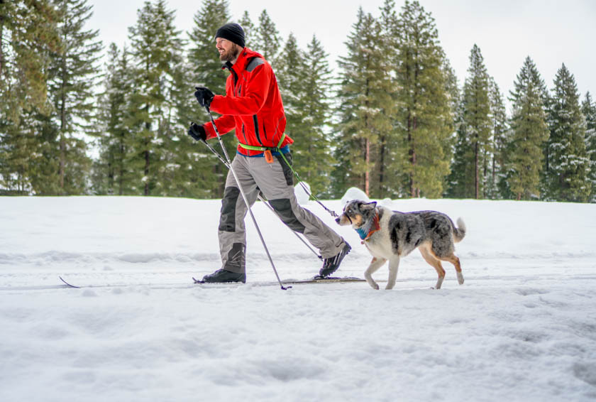 Dave using the Slackline leash with Sora to cross country ski.
