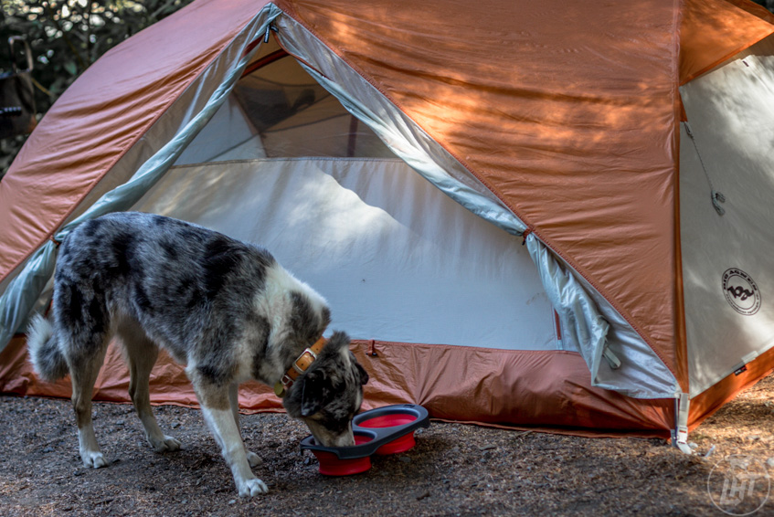 An honest review of Dexas collapsible pet travel bowls.