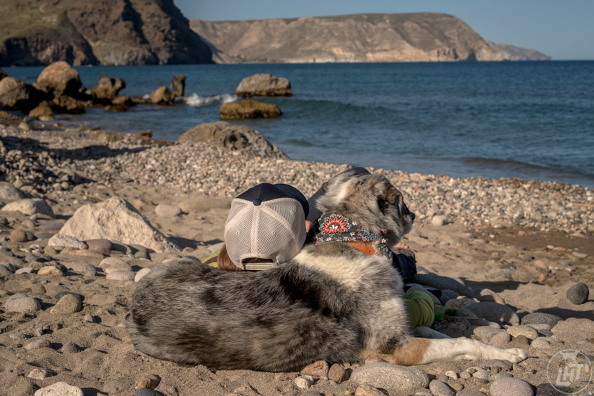 Make this the year that you do more activities with your dog. Include them on your vacations, tackle challenges together, and more.