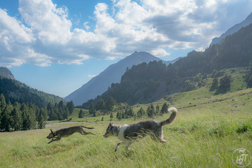 Sora and Laila run free in Benasque, Spain.