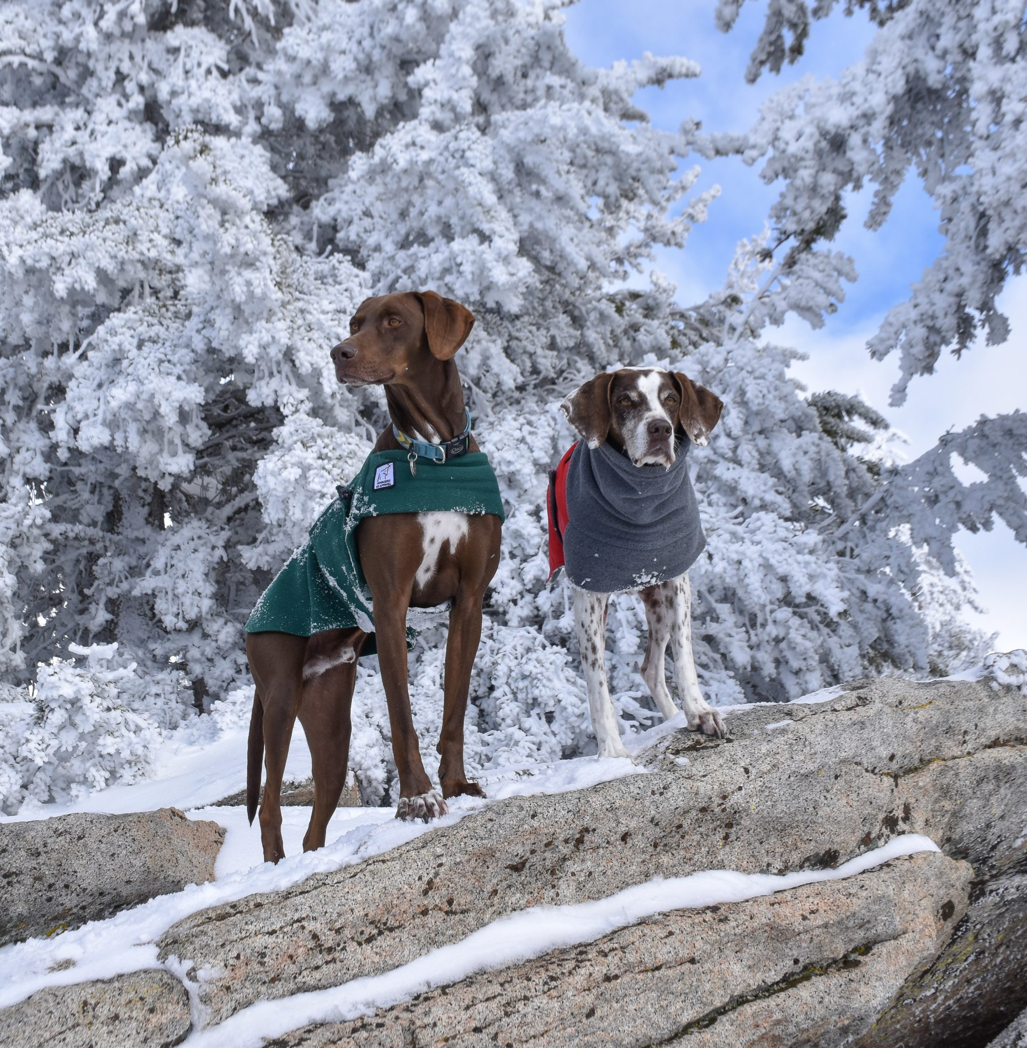 The Voyagers K9 Apparel dog jackets are custom fit to breed or your specific dog to maximize comfort and warmth on winter adventures.