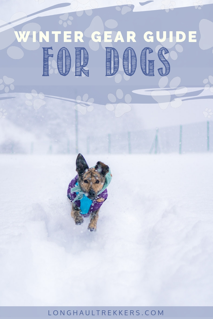 The right winter gear for dogs can keep them comfortable and you worry-free, so that you can continue your outdoor adventures together, even when the temperatures drop.