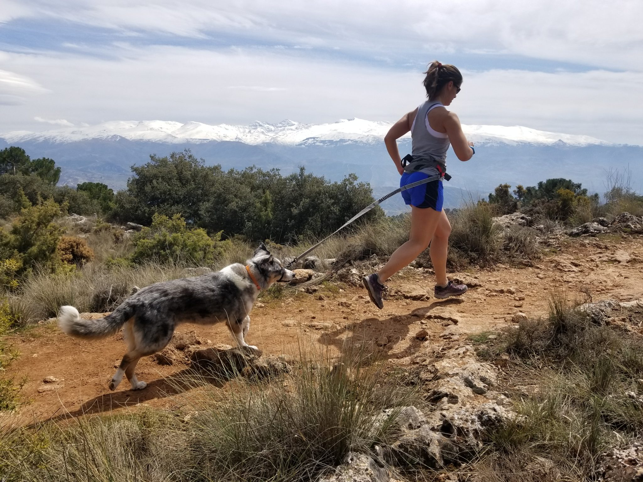 These 11 dog breeds make the best running partners. Whether you go short distances or run ultra marathons, these are our picks for the best dog breeds for running.