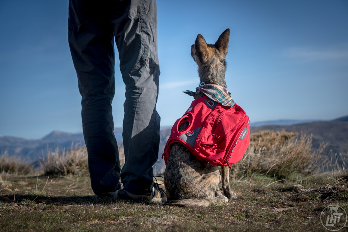 Most dogs can help carry the load. A pack like the Ruffwear Palisades Pack is an essential item to have with your dog backpacking gear.