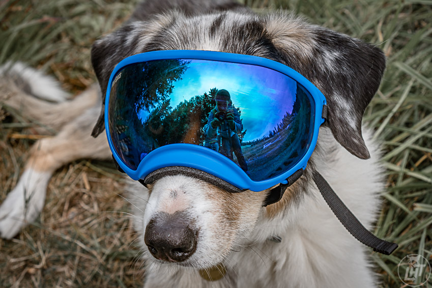 Like humans, dogs need eye protection as well. A pair of dog goggles like RexSpecs will keep their eyes safe in certain conditions. We include them with our dog backpacking gear.