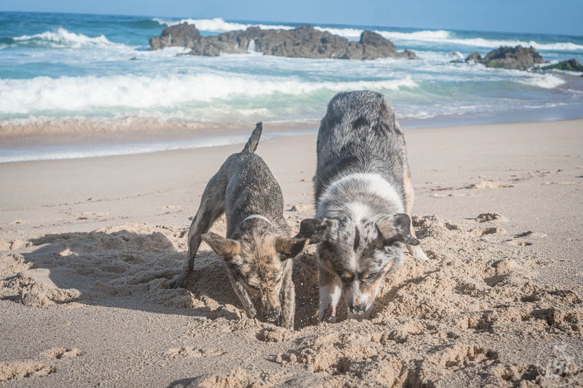 Just as humans practice leave no trace, dog owners must also ensure that their dogs leave a minimal pawprint in natural areas.