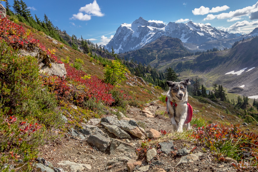 Have your dog carry their own poop out of the trail during backpacking trips.