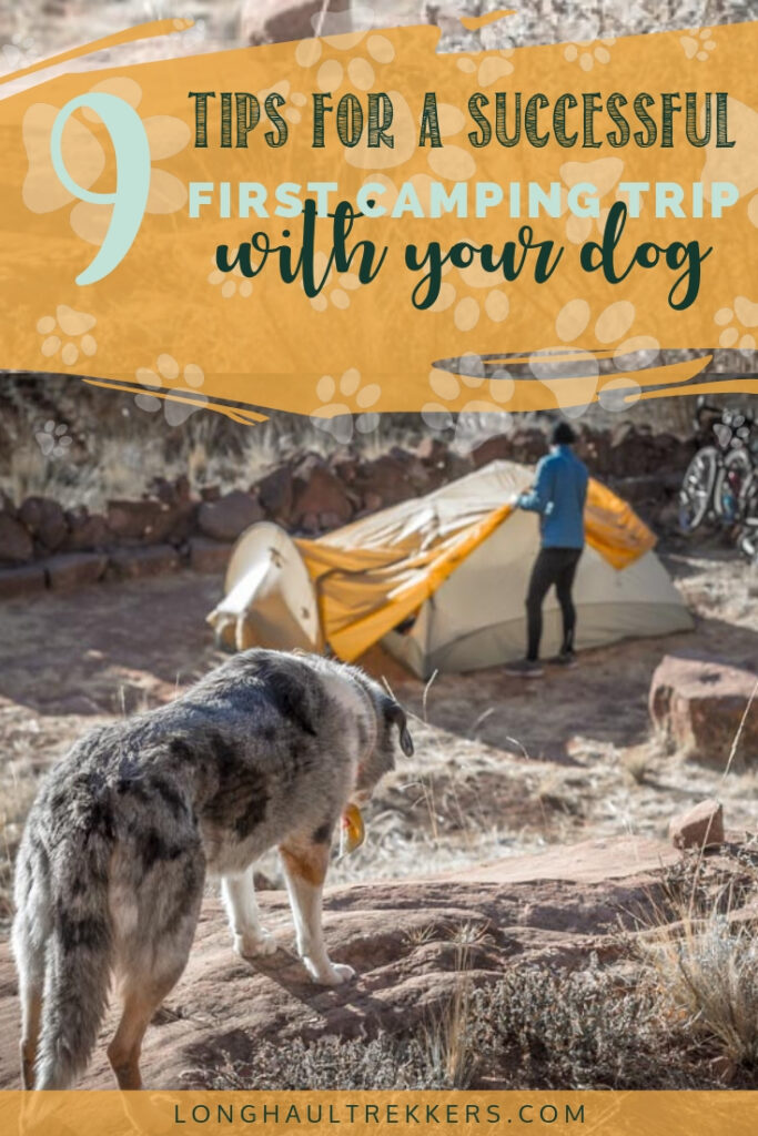 How to Camp with a Dog for the first time Pinterest Image